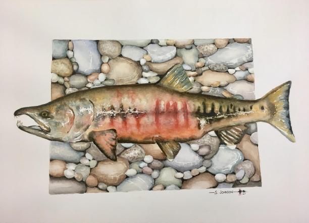 36092-chum_salmon-7182019106-17135