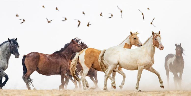 36092-red_desert_wild_horses-8820191024-12463