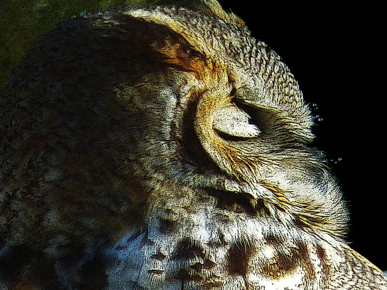 36092-sleeping_owl-81420191150-19619