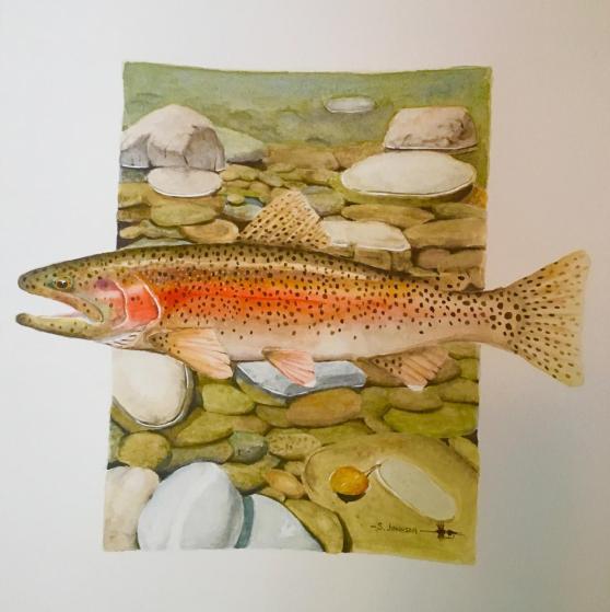 36092-trout_habitat-71820191011-17135