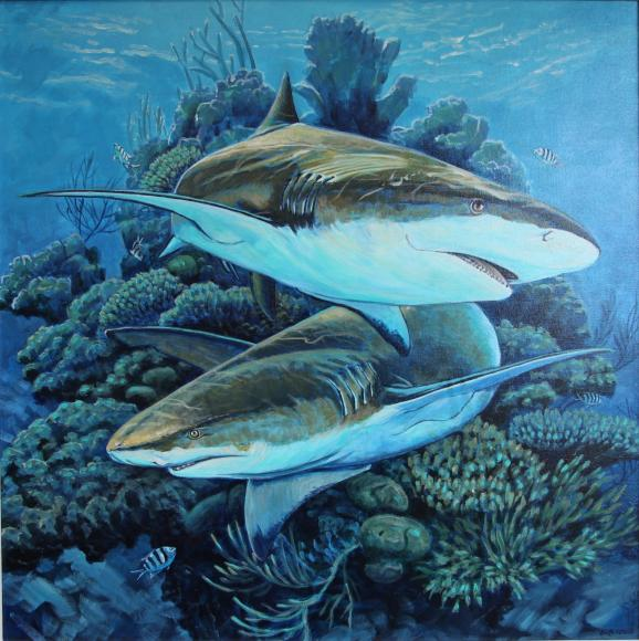 36092-lemon_sharks_at_the_coral_head-8420191410-28221