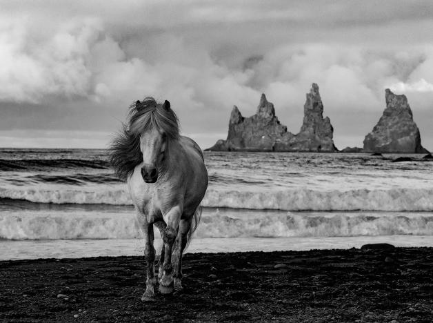 36092-white_mare_on_a_black_sand_beach-8820191022-12463