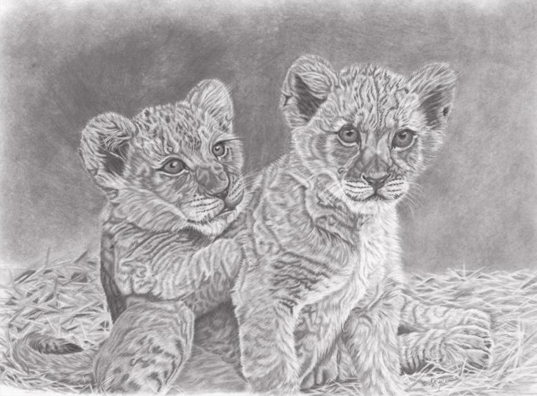 36092-lion_cubs-81620191935-20095